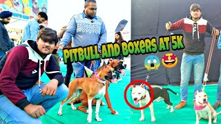 Cheapest Dog Market❤️🔥| Whole sale | Dogs In Cheap Price(Pitbull,Boxer,Beagle,Shih tzu Puppy)