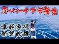 衝撃の貴重4K映像!クロマグロのスーパーナブラ!津軽海峡クロマグロのキャスティングゲーム