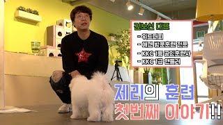 [반려사원] 제리사원의 애견훈련( 강아지 이름부르기, 이리와 훈련)
