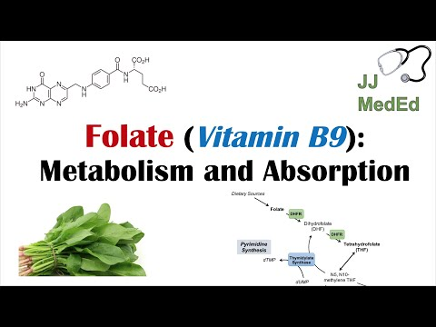 Folate (Vitamin B9): Why We Need It, Dietary Sources, And How We Absorb And Metabolize It
