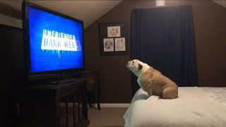 Bulldog Has Insane Reaction To Horror Movie Trailer