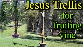 Jesus Trellis Build for Fruiting Vine