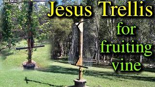 Jesus Trellis Build for Fruiting Vine