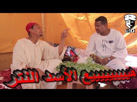 فضيل الأسد .. سلسلة حلقات كوميديا فضيل للنجم عبد الله عبد السلام