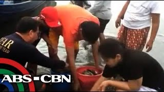 Typhoon Glenda damages Taal Lake fish farms
