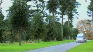 Great Trees of East Devon - The Bicton Monkey Puzzle Tree Ancient tree