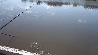 Рыбалка на поплавок удочки соревнования по рыбалке