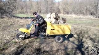 видео Муравьи в дровах. | Клуб Любителей Муравьев