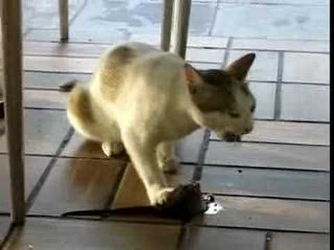 Cat Food Ratings >> Gato come Rata en mac donald - YouTube