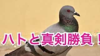 遂に登場、スマホYouTuber!⇒http://urx.nu/eaN9 我が家のペットは鳥を...