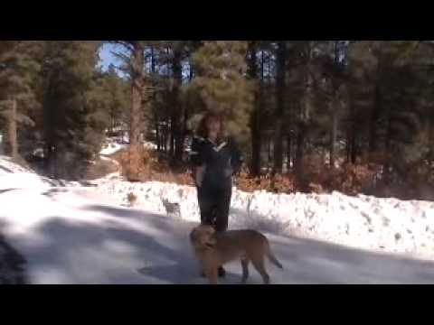 How to stop pulling on the leash, biting, jumping up on leash