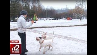 Опасных собак оденут в намордники законодательно!