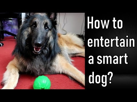 How to Entertain a Smart Dog on a Rainy Day   Pass the Ball!
