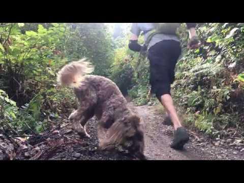 Daisy The Trail Dog(MTB) Santa Cruz Nomad!