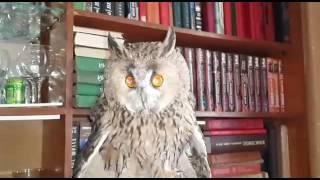 Говорящая сова (2) Owl and dog