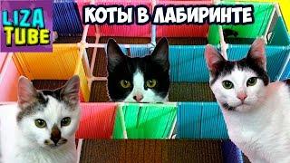Лабиринт #1 для кошек 😺 Три кота проходят лабиринт 😂 \ LizaTube