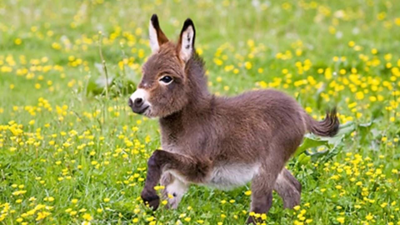 Mini Esel