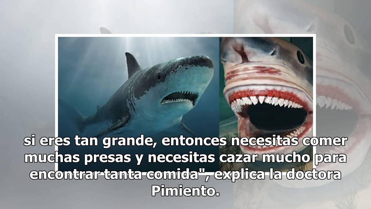 Mitos y verdades sobre el Megalodon, el gigantesco tiburón prehistórico