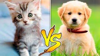 Hunde vs. Katte!