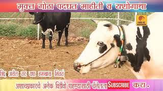 दुग्ध व्यवसायातून महिन्याला दीड लाखांचा नफा Muktsanchar Gota pattern milk occupation success story