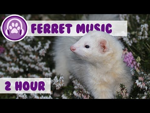 Music For Ferrets - Relaxation Music For Anxious Ferrets!