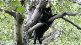 видео ролик с кошками