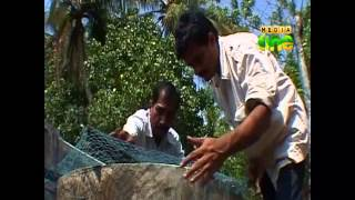 Njatuvela Agricultural awareness - Ornamental Fish Farming | (Part 02, Episode 26)