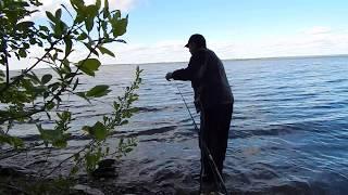 Рыбалка на Волге в июне с берега.
