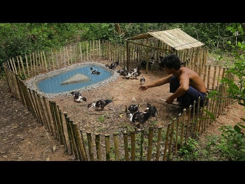 Rescue Baby Duck To Build Mini Swimming Pool And Bamboo House For Duck