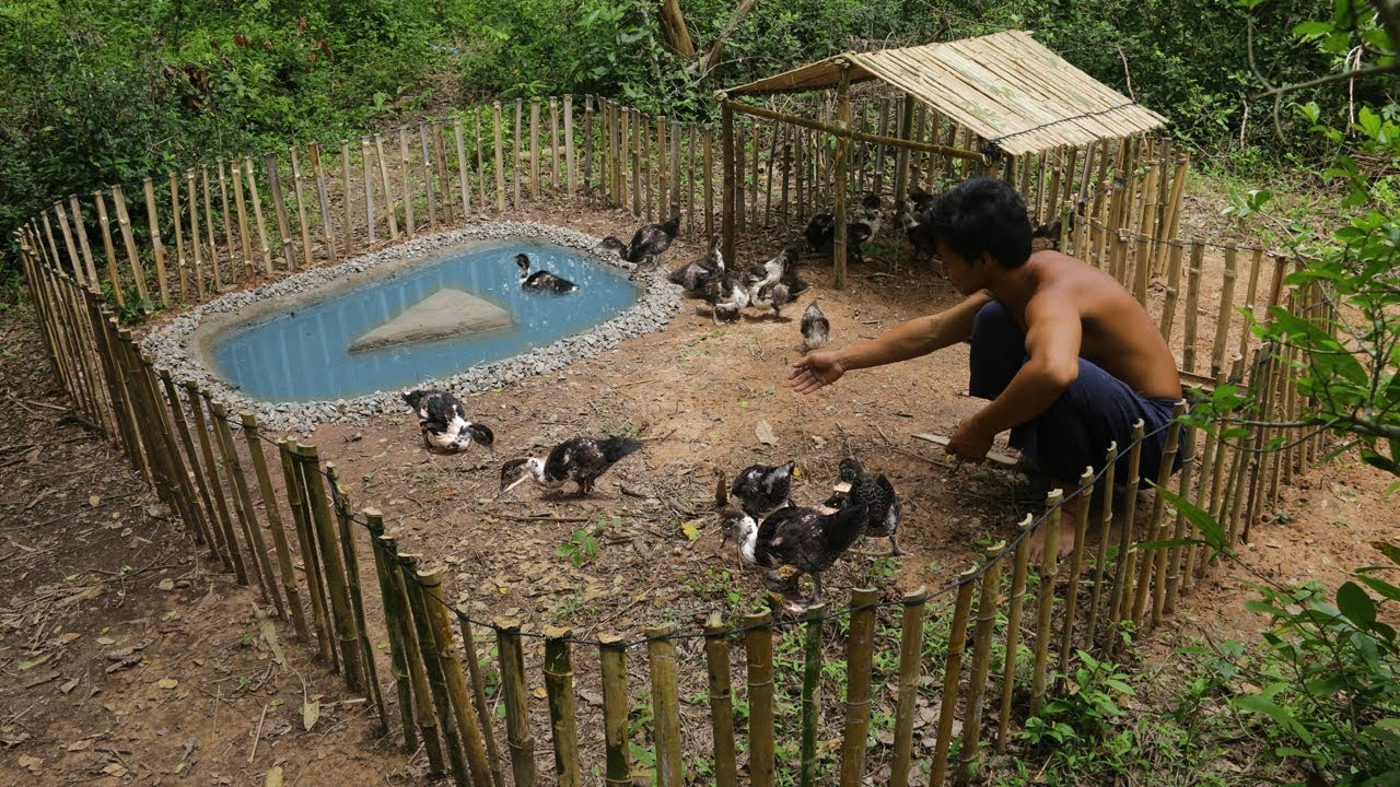 Rescue Baby Duck To Build Mini Swimming Pool And Bamboo