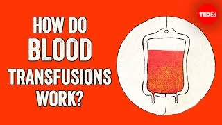 How do blood transfusions work? - Bill Schutt