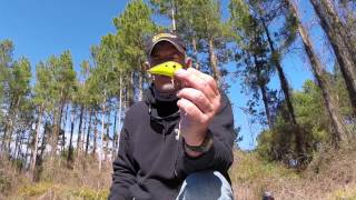 Bass Craft Crankbaits   (Under water lure action)