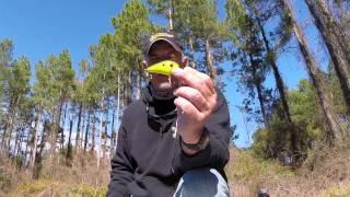 Bass Craft Crankbaits   (Under water lure action)