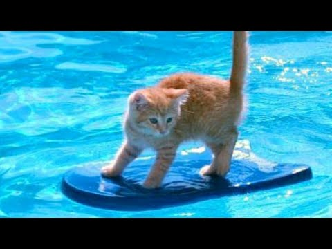 1% CHANCE that these animals WON'T MAKE YOU LAUGH!  Funny ANIMALS IN POOLS videos