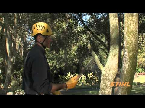 How to Prune Young Trees