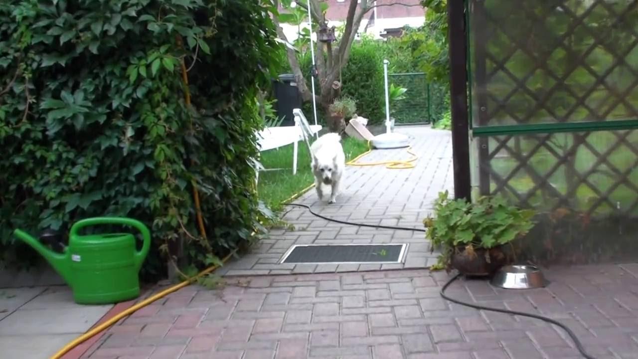 Kleinspitz Molly *1080p HD - YouTube