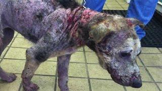 捨てられ、死を待つだけだった子犬 3カ月後に奇蹟の回復 捨てられ、病気...