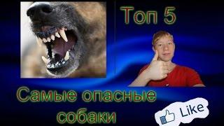 [Топ 5 ] Самые опасные и сильные собаки
