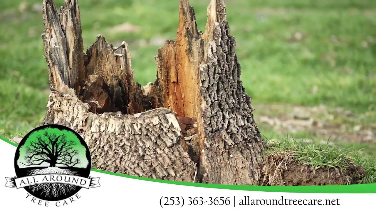 All Around Tree Care Wa You