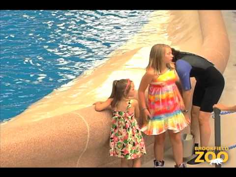 Army Sergeant Surprises Daughters at Brookfield Zoo's Dolphin Presentation