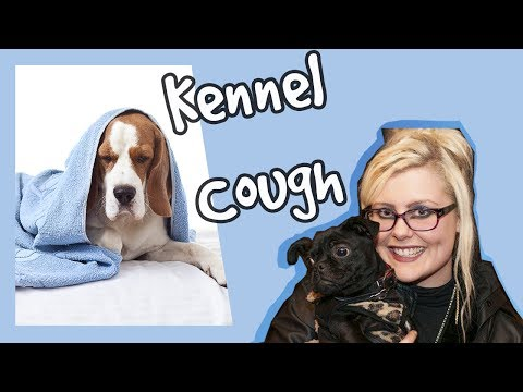 what-is-kennel-cough?-how-to-tell-whether-your-dog-has-it-and-how-to-prevent-&-cure-it-+-competition