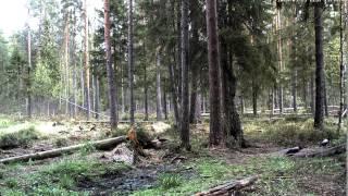 Alutaguse mets 15 мая 2014 г