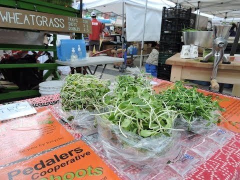 Factors for Success in Microgreen Production