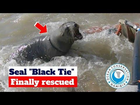 "Seal ""Black Tie"" Finally Rescued"