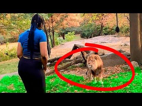 Невероятные Случаи, Когда Люди Перелезли Ограждение в Зоопарке - Видео онлайн
