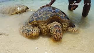 상어와 거북이. Shark and turtle