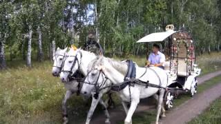 Свадебная карета в упряжке тройки коней
