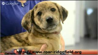 Ct Animal Shelters Ridgefield Operation For Animal Rescue Ct Animal Shelters