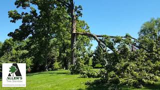 Allen's Tree Service - Storm Damage - Tree Service St. Louis