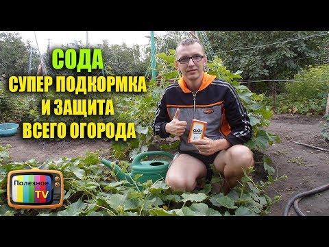 СОДА СУПЕР ПОДКОРМКА